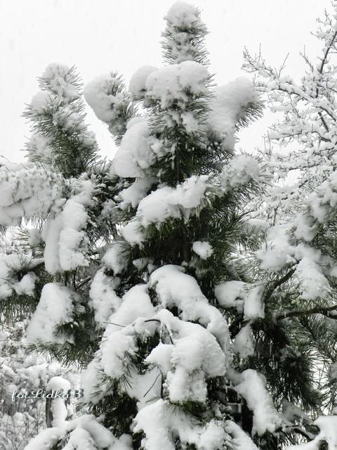 Zima wróciła