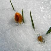 Gdzie jesteś wiosno?