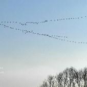 Klucz ptaków.