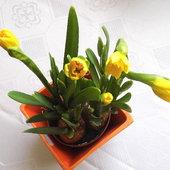 Namiastka wiosny dla Was :)