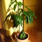 Nieznana mi roślinka.