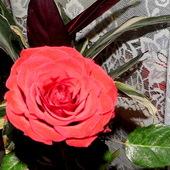 Panowie, kwiatek dla Was. . . .
