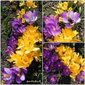 Pierwszy Dzień Wiosny 2012