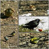 Ptaki w moim ogrodzie