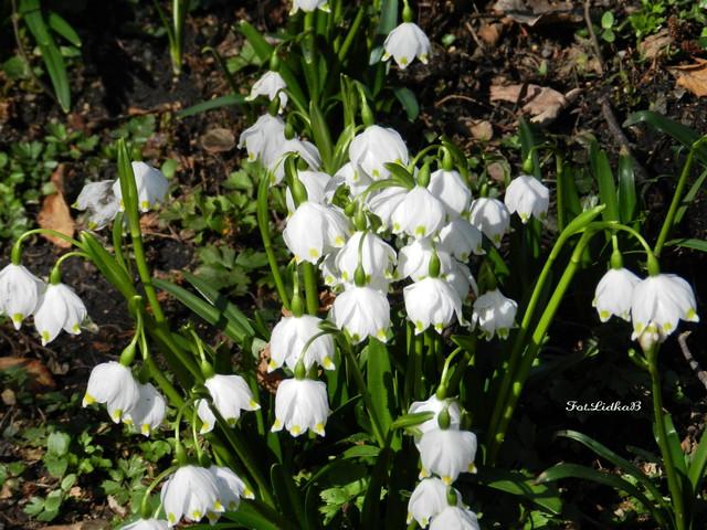 Wiosna 2011-Marzec