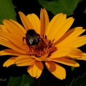 kwiatek i gość