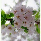 Kwitnąca gałązka