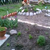 Ogródek i kamienie
