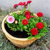 Pozdrawiam wiosennie :)