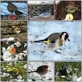 Ptaki w moim ogrodzie 2013