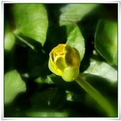Rozkwitanie wiosenne