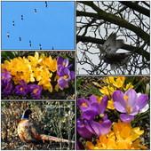 Wiosna 2012- marzec