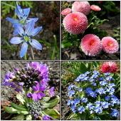 Wiosna w moim ogrodzie.