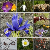 Wiosna,pierwsze kwiaty.