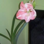 Zakwitł ! : P Pozdrawiam Wiosennie ! :)