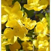 Żółte kwiatki...