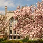 historyczne magnolie