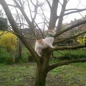 kitka na drzewie