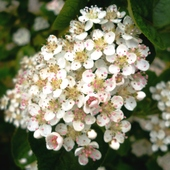Kwiateczki w kropeczki:)