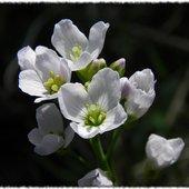 kwiatki na niedzielę