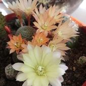 kwiatuszki :)