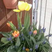 Wiosenne Na Balkonie