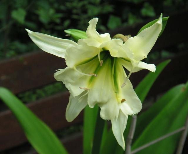 Pierwsze kwiaty żółtej
