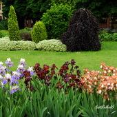 IRYSY                  -Ogród Botaniczny we Wrocławiu