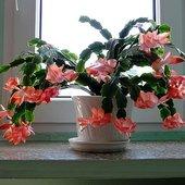 Pierwsze kwiaty w 2010r.