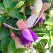 Pierwszy kwiatek