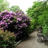 RÓŻANECZNIKI        -Wrocławski Ogród Botaniczny