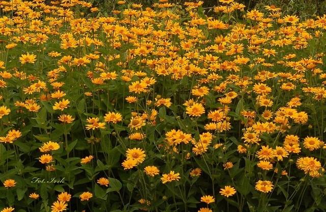 kwiaty, fragment