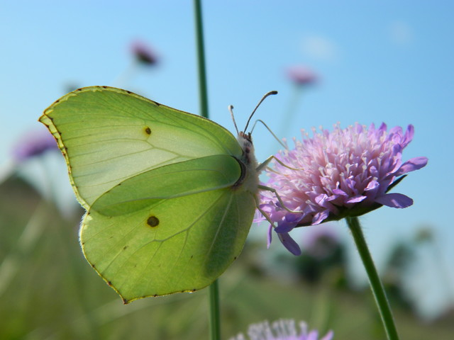 Motylek ...