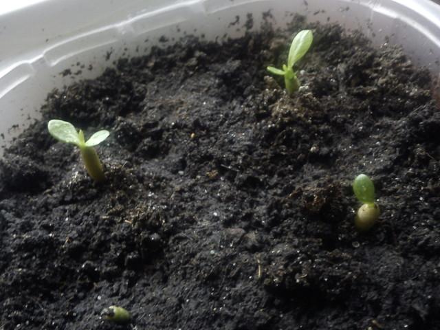 Zasiałam i powoli rosną