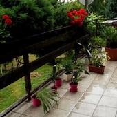 Dzisiaj w deszczową pogodę jedynie one mają radochę ;)