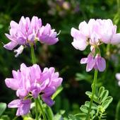 Łąkowe kwiatki..