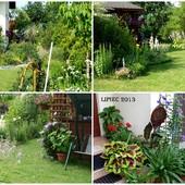 Ogrod w lipcu