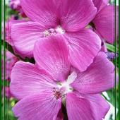 Tradycyjnie... inspiracja na różowe sny:-)