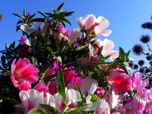 Różowych snów życzę;)