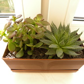 Grubosz i Aloes