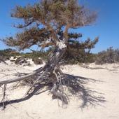 grunt tto mocne korzenie