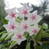 mój ulubiony kwiat lecz nie wiem jak się nazywa