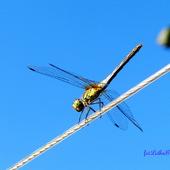 Ważka, akrobatka na linie