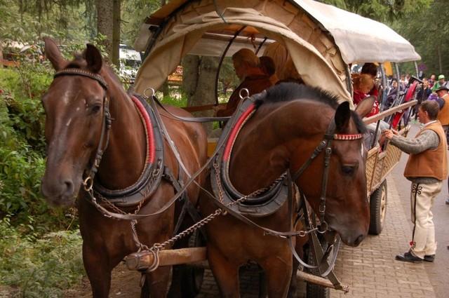 piękne konie
