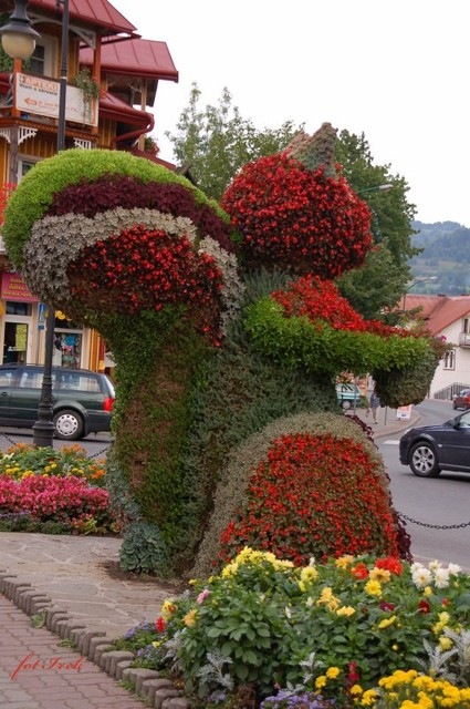 wiewiórka i kwiaty