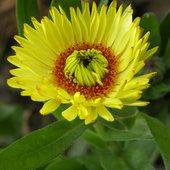 kwiatek na dobry wieczór