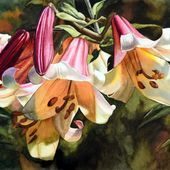 Lilia królewska - akwarela