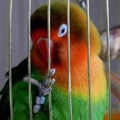 Moja papuga
