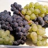 pierwsze winogronko z własnego ogrodu. :)