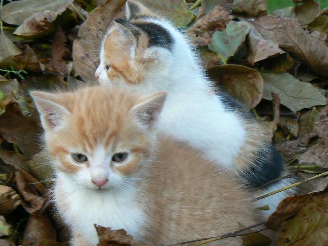 aaa.. .kotki dwa.....